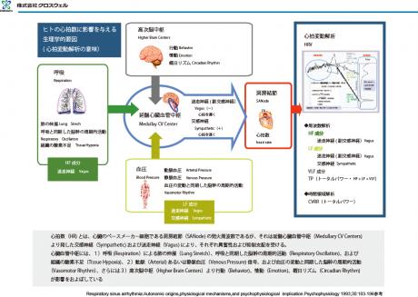 ヒトの心拍数に影響を与える生理学的要因(心拍変動解析の意味)