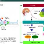 ストレス・自律神経関連情報